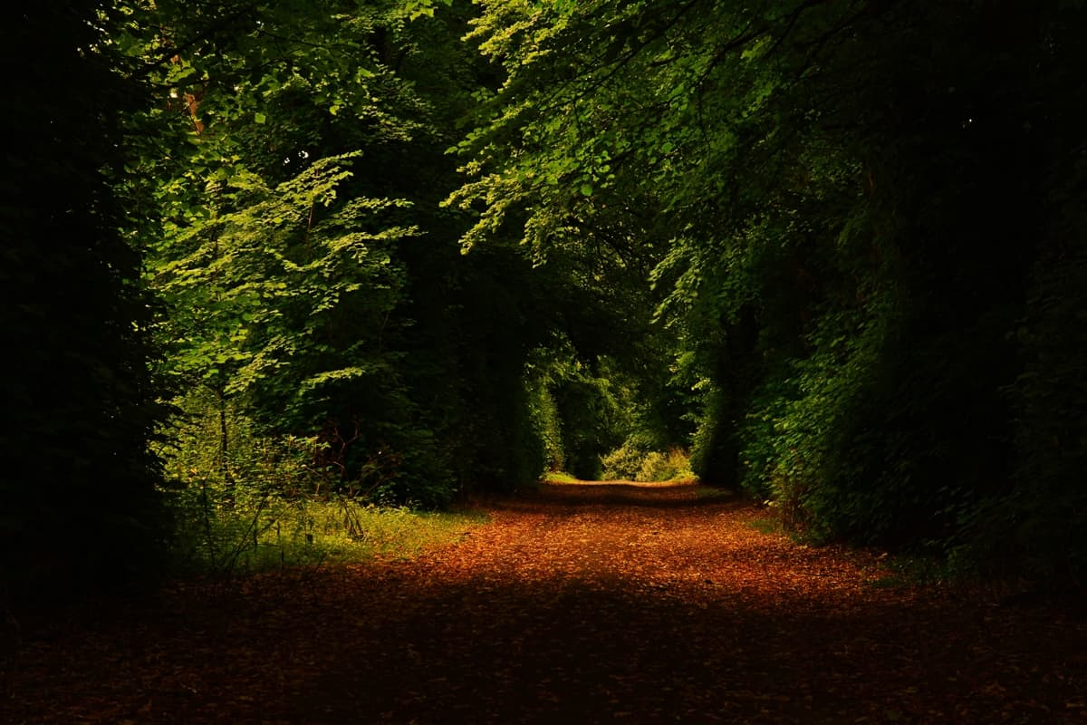11 Doneraile Park Alan Noonan Photography