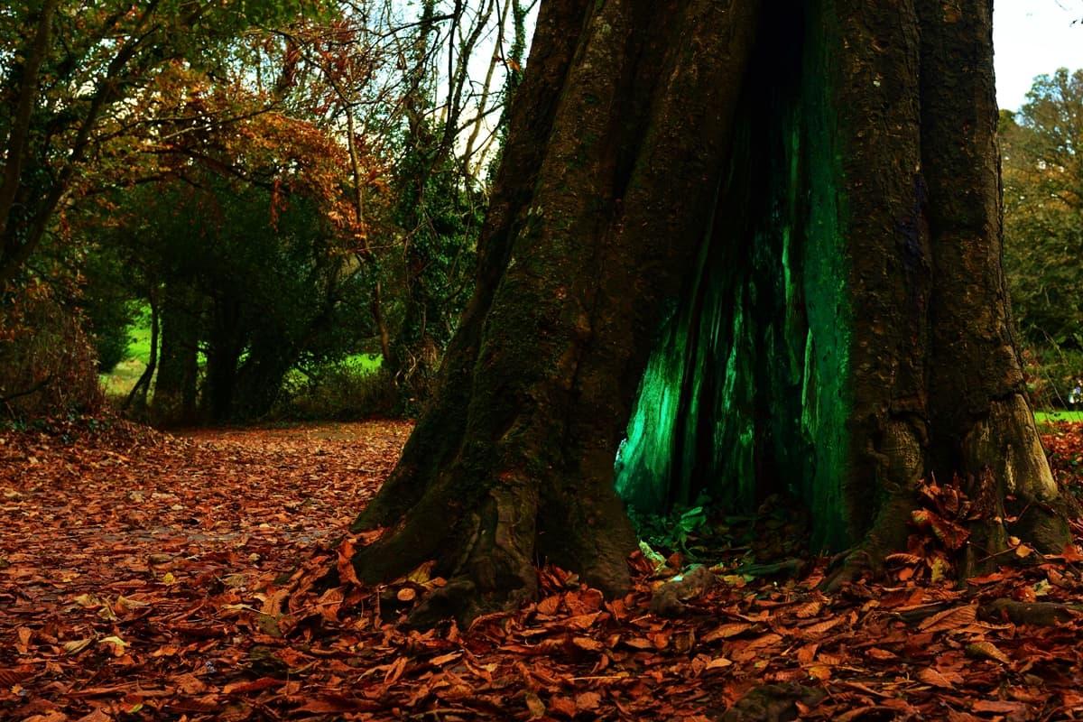 12 Doneraile Park Alan Noonan Photography