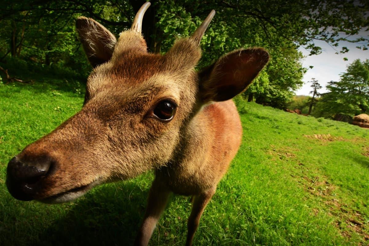 13 Doneraile Park Alan Noonan Photography