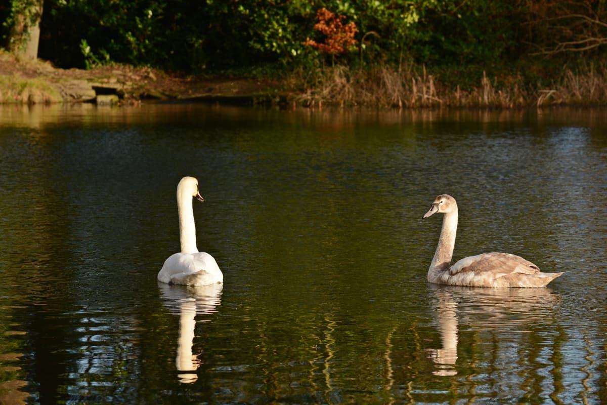 14 Doneraile Park Alan Noonan Photography