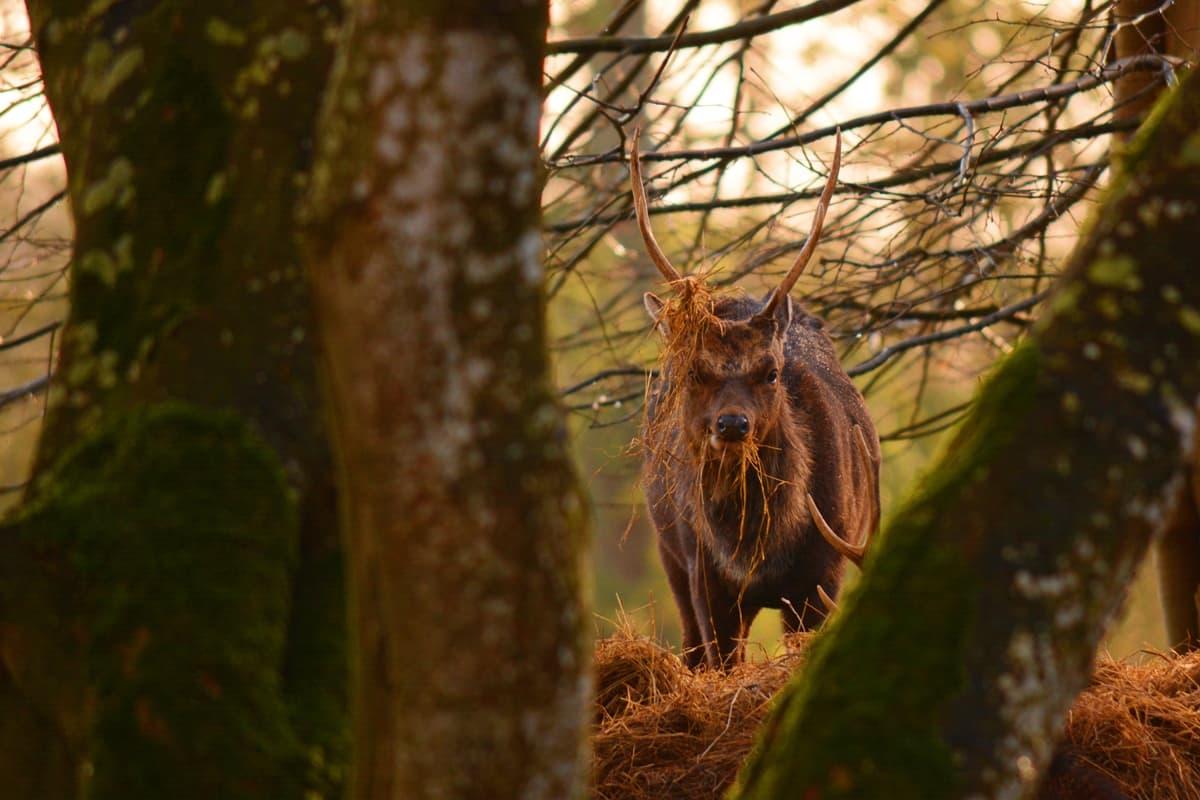 22 Doneraile Deer Alan Noonan Photography