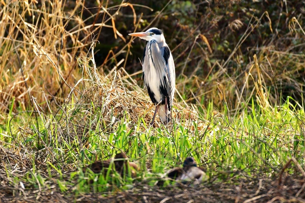 26 Doneraile Park Alan Noonan Photography