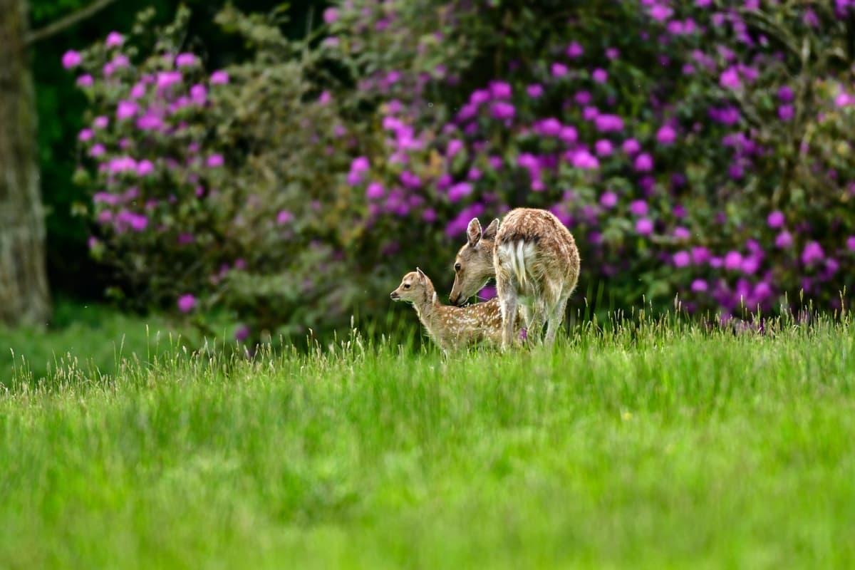 30 Doneraile Park Alan Noonan Photography