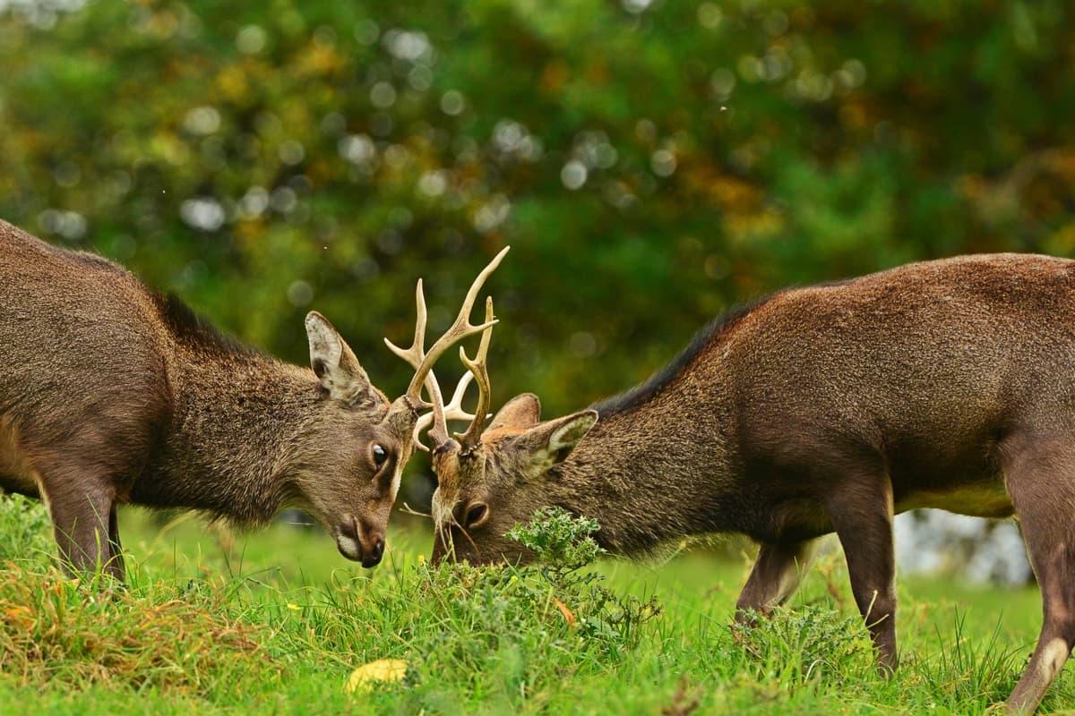 31 Doneraile Park Alan Noonan Photography
