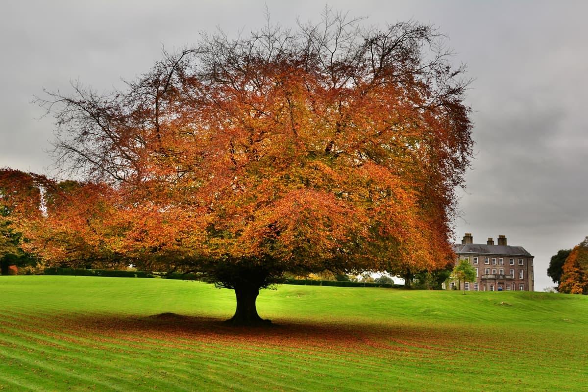 34 Doneraile Park Alan Noonan Photography