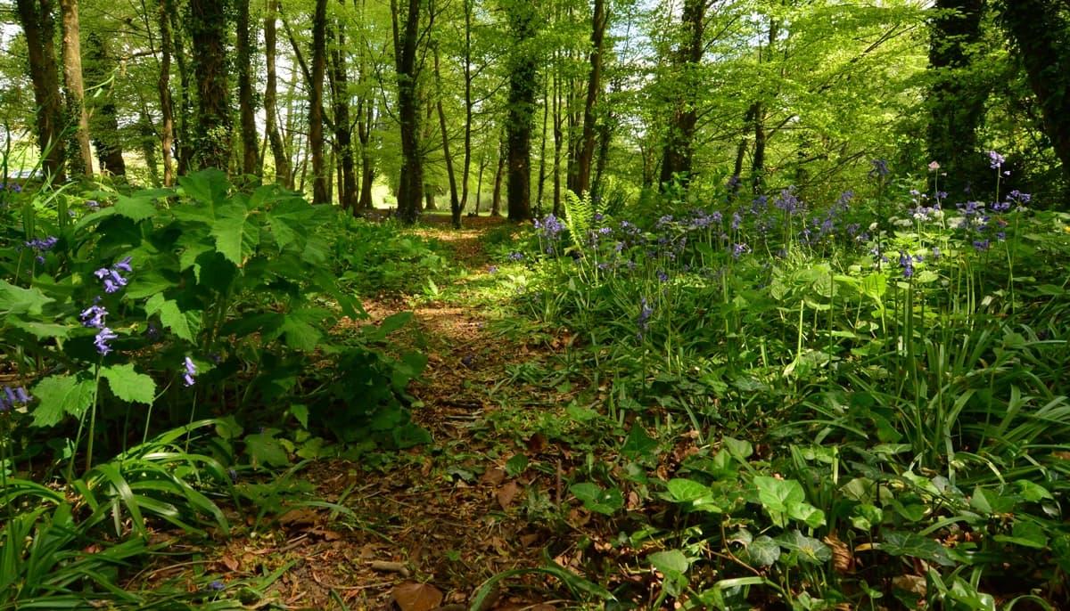 35 Doneraile Park Alan Noonan Photography