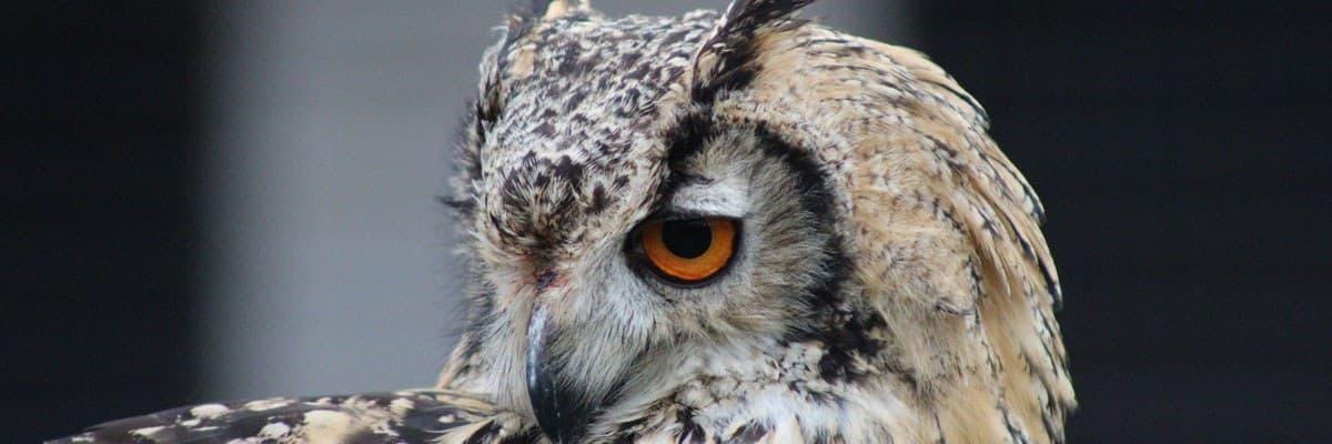 Animal Magic & Ballyhoura Falconry