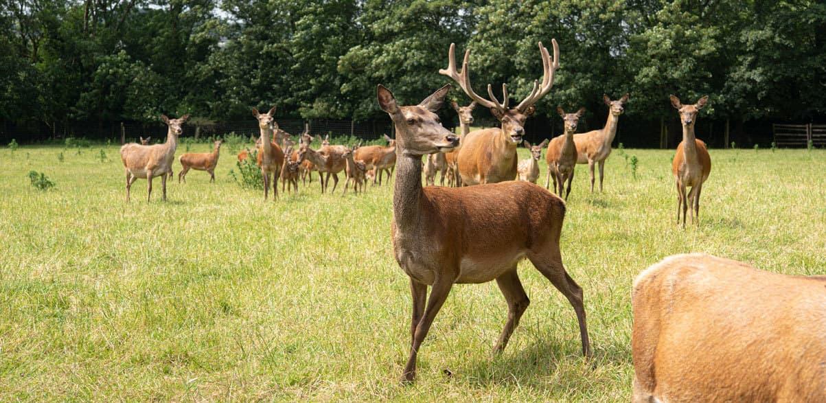 Ballinwillin House Deer Garden
