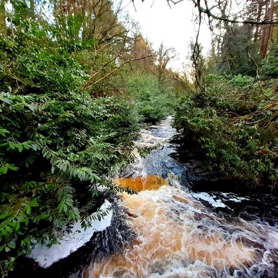 Clare Glens Loop Walk 5