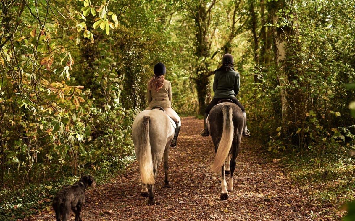 Clonshire Equestrian Centre 1