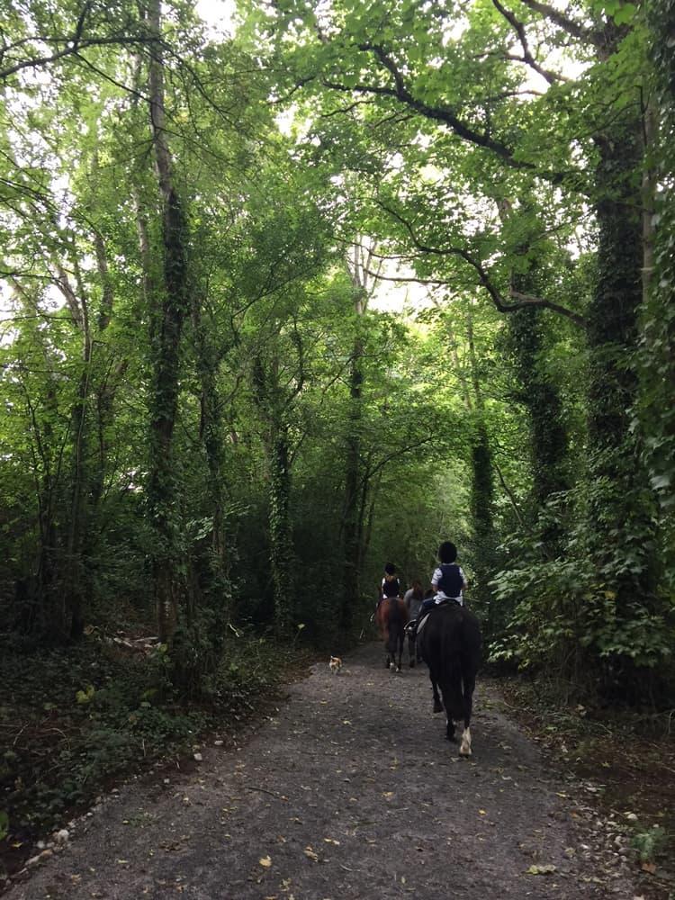 Clonshire Equestrian Centre 2