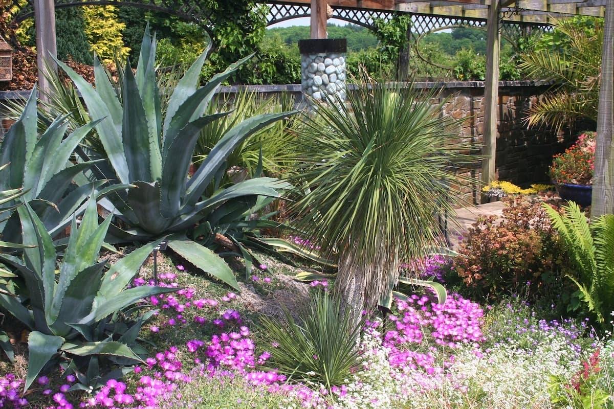 Coolwater Garden Aloe Vera copy