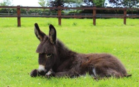 Donkey Sanctuary 2