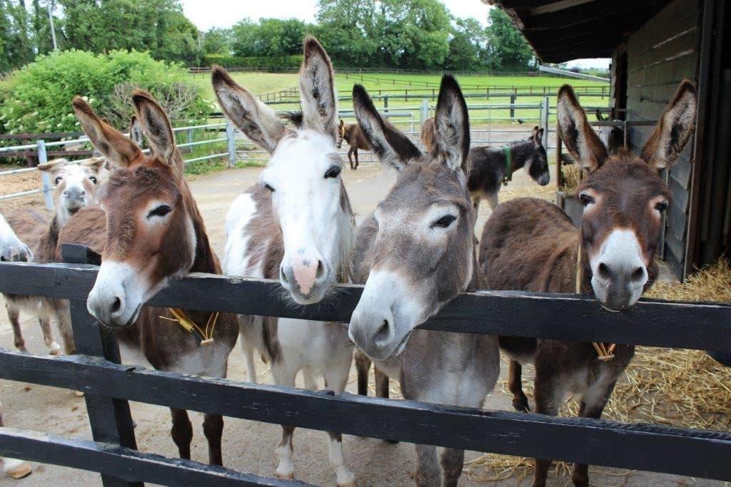 Donkey Sanctuary 3