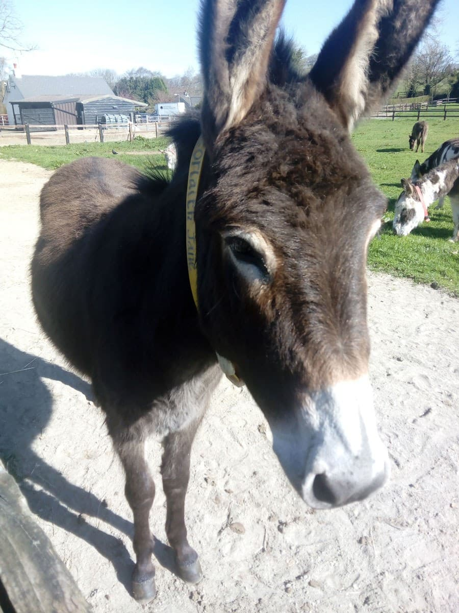 Donkey Sanctuary 4