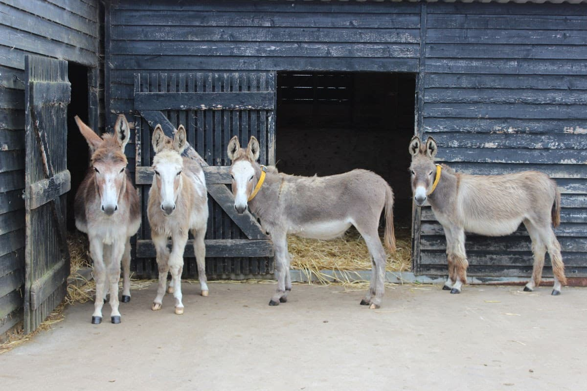 Donkey Sanctuary Open Farm 2