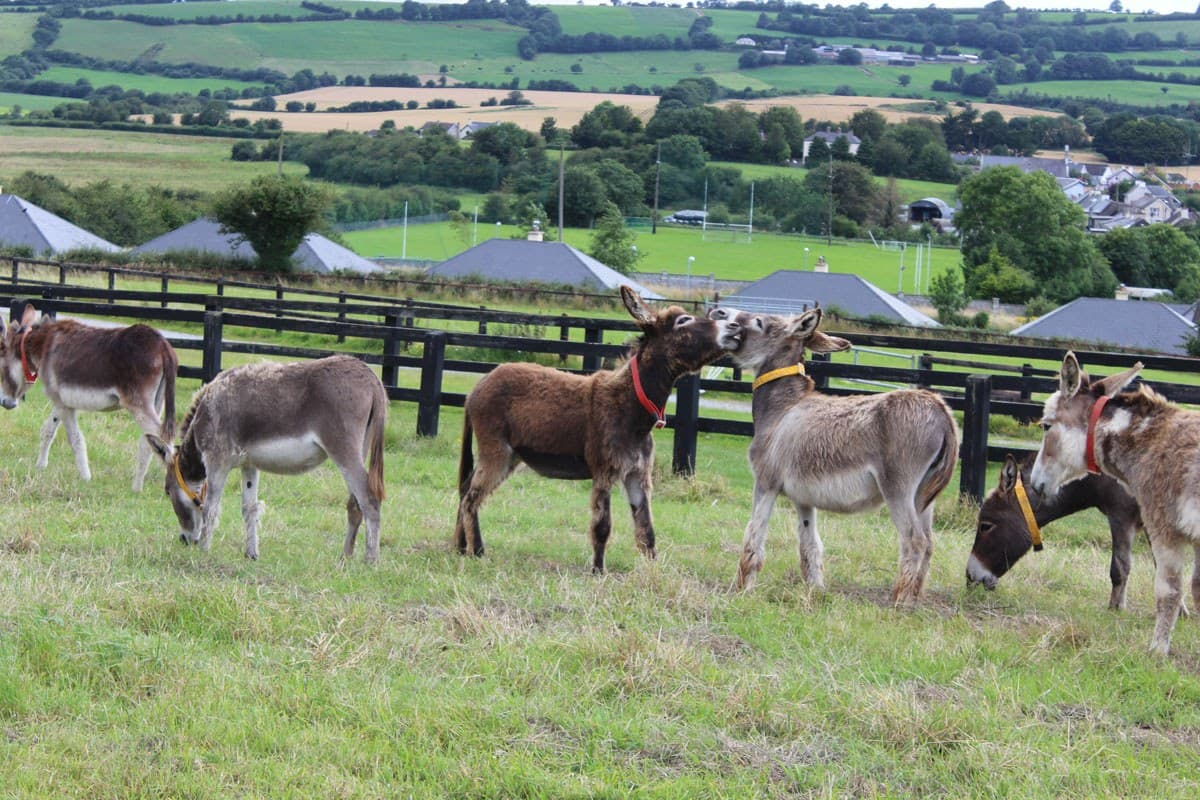 Donkey Sanctuary Open Farm 3