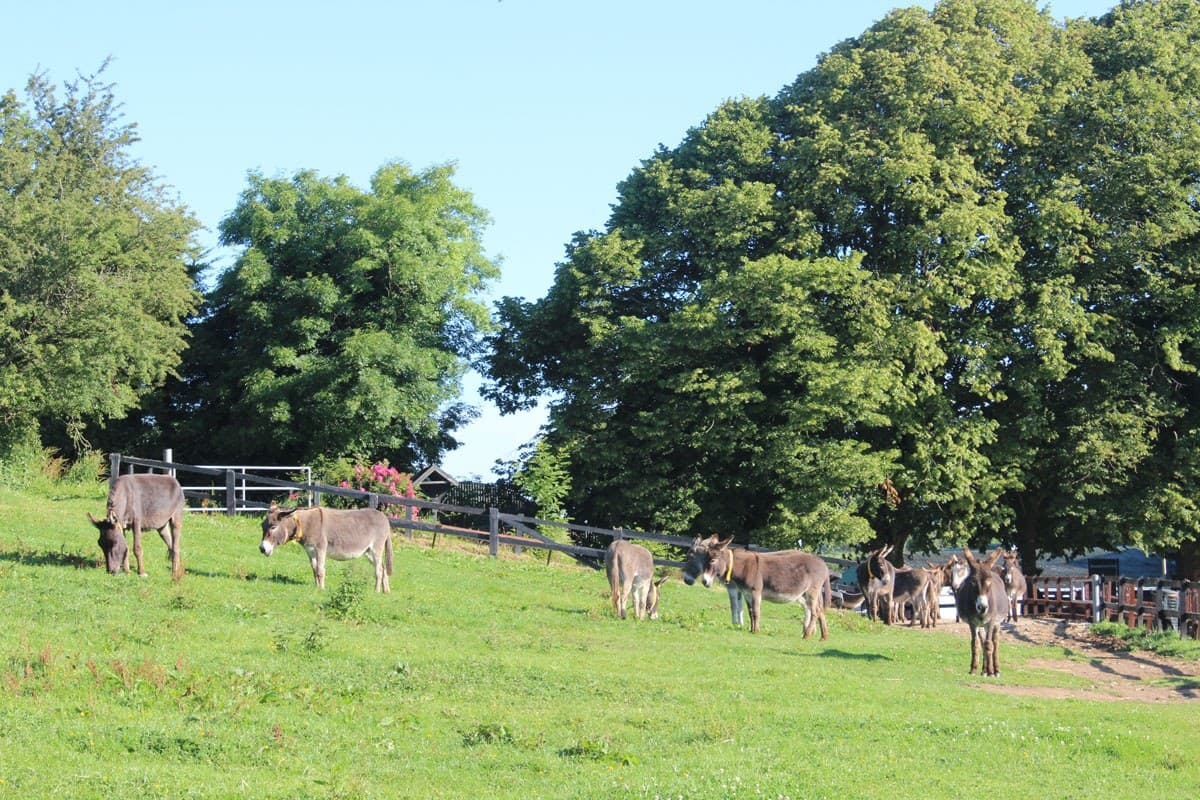 Donkey Sanctuary Open Farm 4