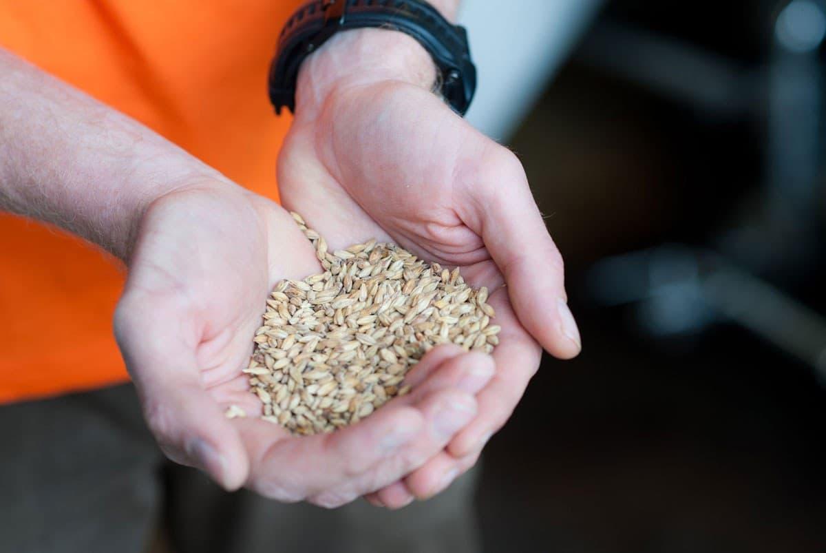 Eight Degrees Brewing Irish malted barley