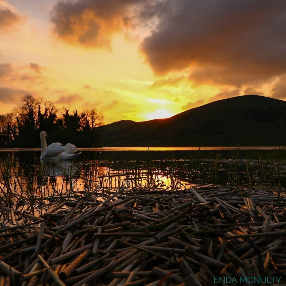 Enda Mc Nulty Swan and sunset lough gur