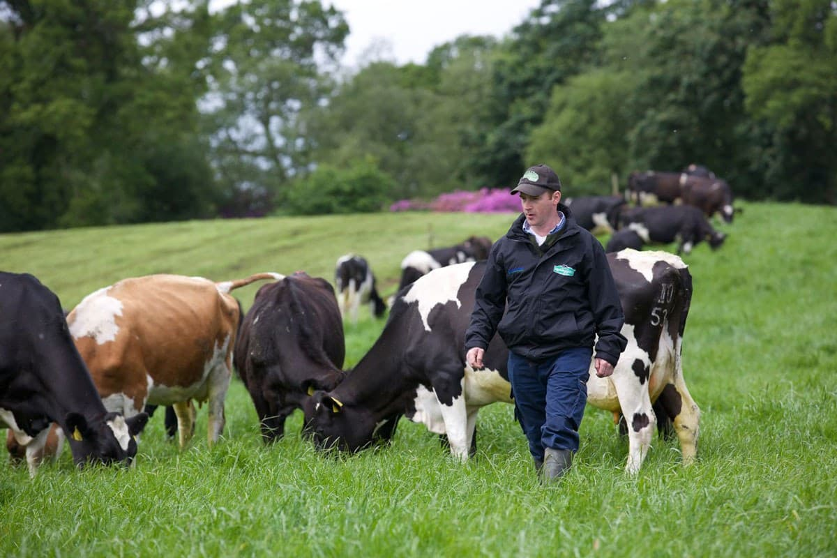 Glenstal Farm 2