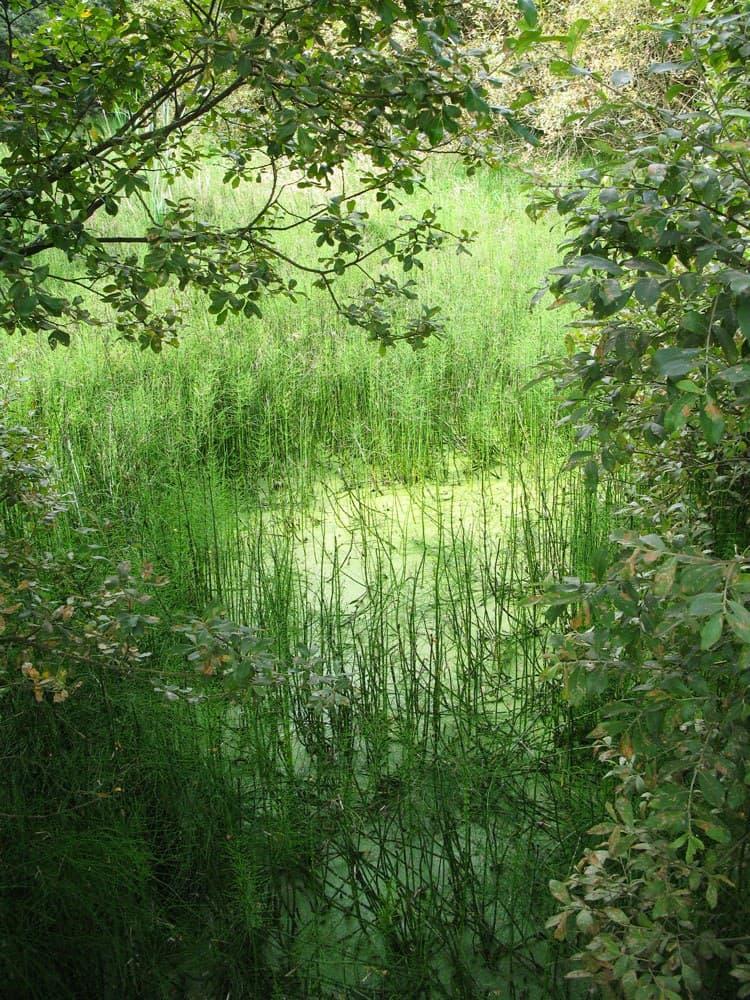 Griston Bog Swamp