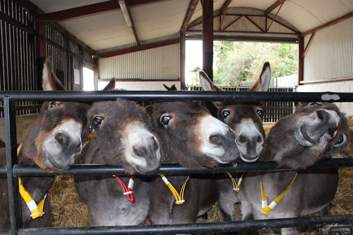 Group of donkeys Doneky Sanctuary