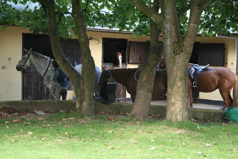 Hillcrest Equestrian 5