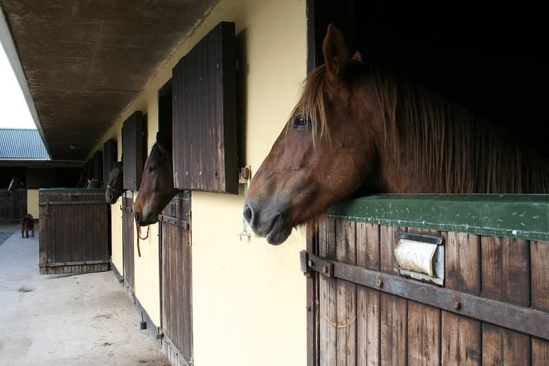 Hillcrest Equestrian 6