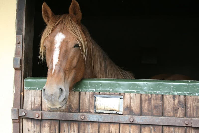 Hillcrest Equestrian 7
