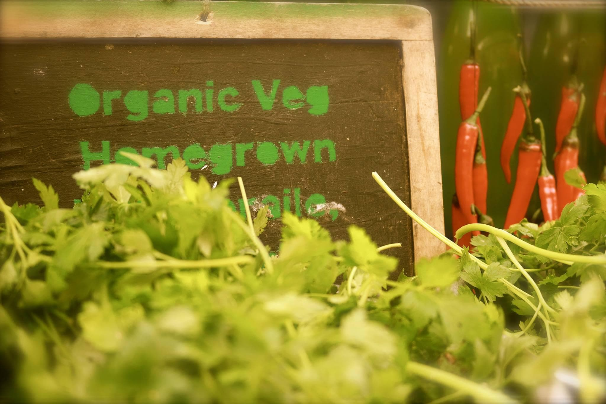 Kilbrack Organic Farm 2
