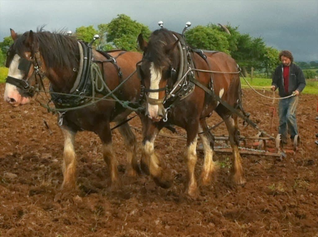 Kilbrack Organic Farm 4