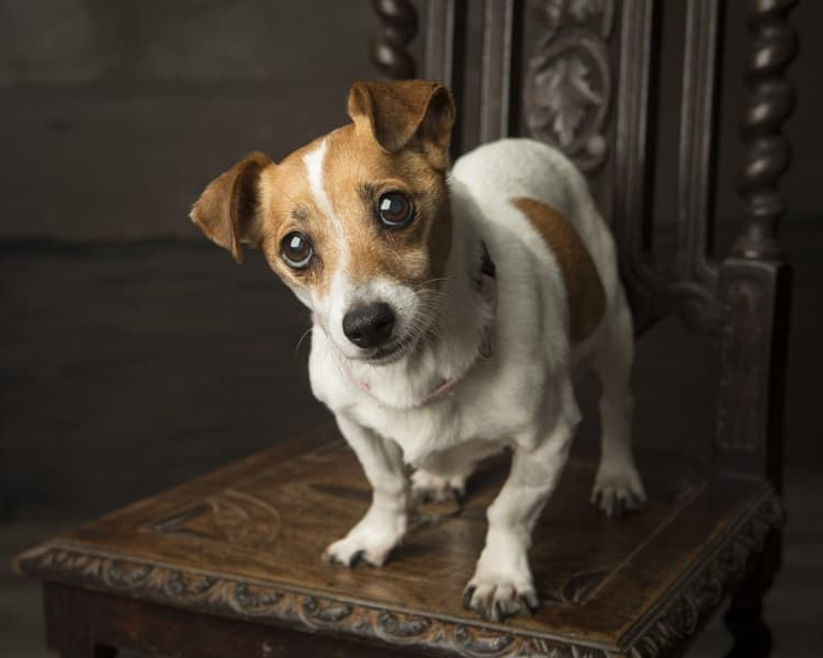 Limerick Animal Welfare 1