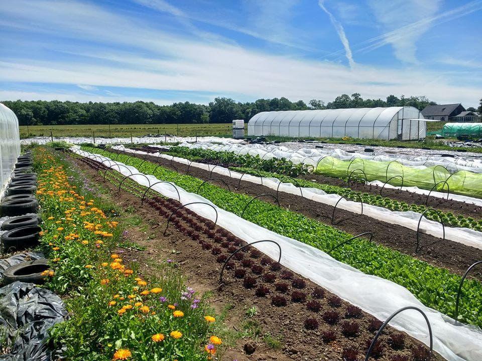 New Leaf Urban Farm