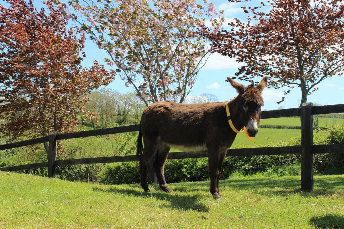 Open Farm Knockardbane Donkey Sanctuary