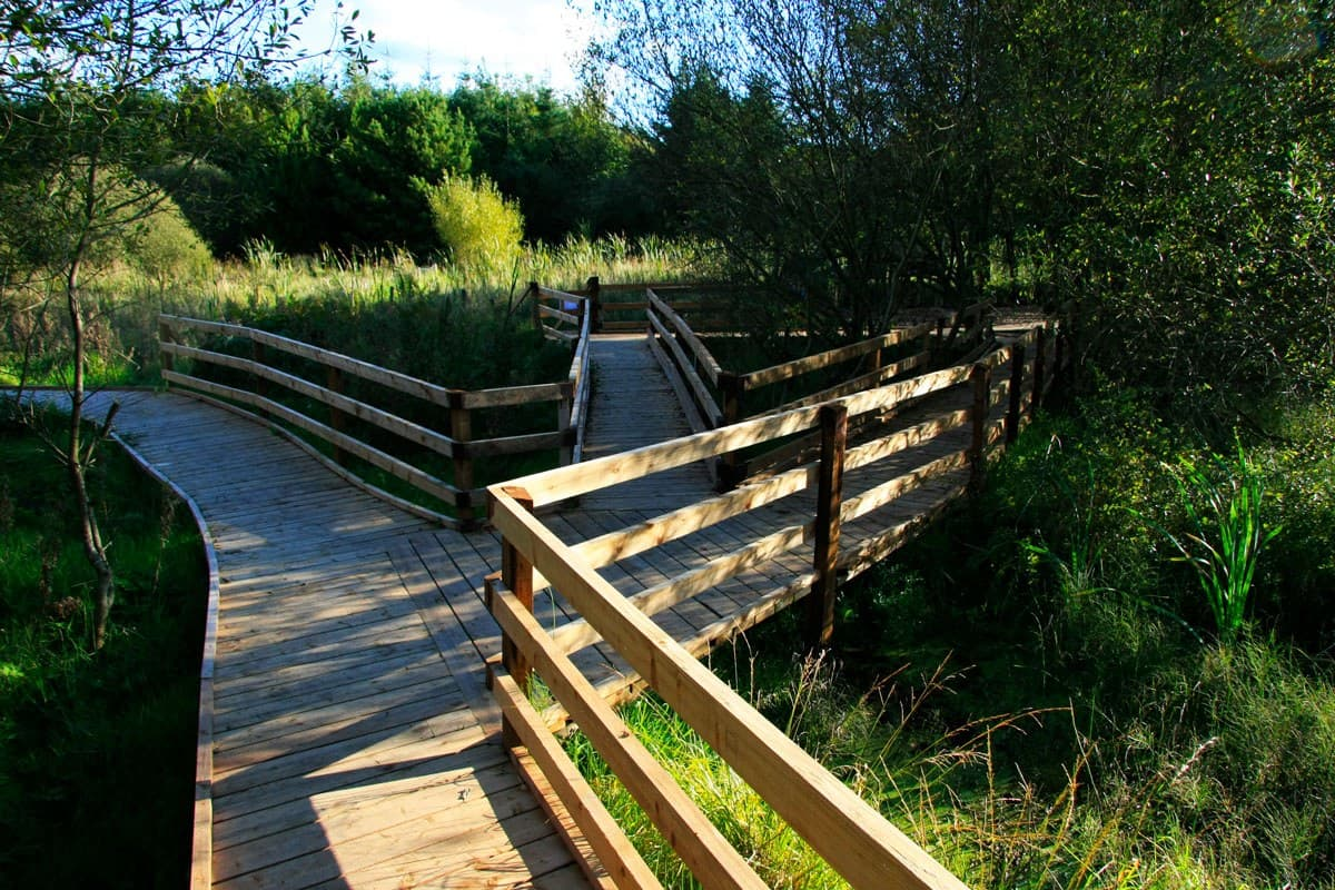 Boardwalk through the griston bog